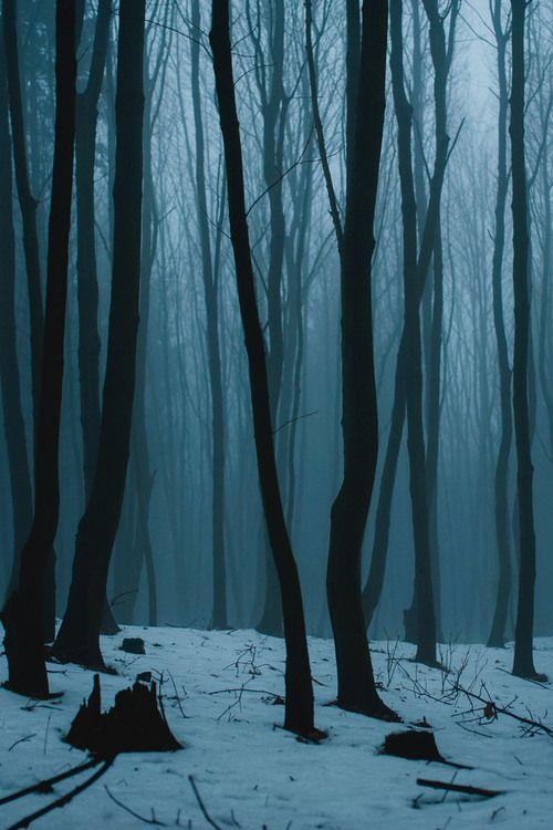 Foret 1